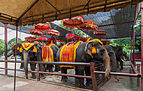 Elefantes, Ayutthaya, Tailandia, 2013-08-23, DD 10.jpg