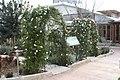 Eleouthkia Traditional and Botanical Park, Cyprus - panoramio (18).jpg