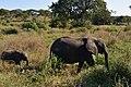 Elephants, Tarangire National Park (38) (28082152323).jpg