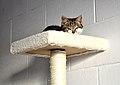 Ellie On Lookout. (19069277249).jpg