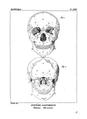 Encyclopédie méthodique - Systeme Anatomique, Pl18.png