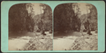 Enfield ravine looking down, Ithaca, N.Y, from Robert N. Dennis collection of stereoscopic views.png
