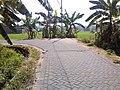 Enggok-enggokan dekat rumah Bapak Bambang Purwito - panoramio.jpg