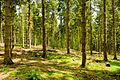 England - English Summer Forest (7183021482).jpg