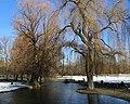 Englischer Garten Winter Muenchen-5.jpg