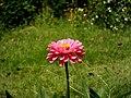 English Flower.jpg