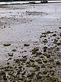 Erandio - Astrabudua, la Ría 17.jpg