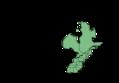 Eurybia divaricata USDA distribution.png