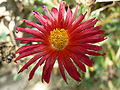 Fale - Giardini Botanici Hanbury in Ventimiglia - 185.jpg