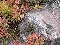 Fall colors (1904339fb67c4408a3bd8569d8ee864b).JPG