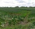 Farmland near South Kilworth Road - geograph.org.uk - 867812.jpg