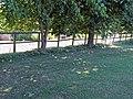 Fence and lawn at Gaston Green, Little Hallingbury, Essex, England 01.jpg