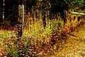 Fenced Fall (248137471).jpg