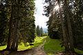 Fichtenwald über der Furggaalp bei Arosa.jpg