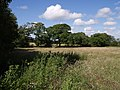 Field at Brandis Corner - geograph.org.uk - 489444.jpg