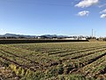 Fields near Buzen-Kokubunji Ruins 6.jpg