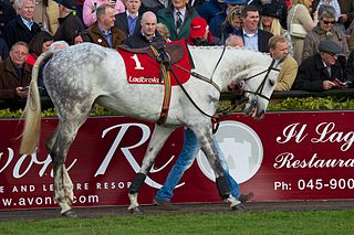 Fiveforthree Irish-bred Thoroughbred racehorse