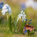 Flickr - Laenulfean - flower details.jpg