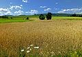 Flickr - Nicholas T - Buffalo Valley (2).jpg