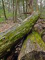 Flickr - Nicholas T - Henry's Woods (4).jpg