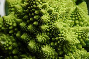 Self-similarity - Close-up of a Romanesco broccoli.
