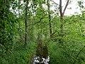 Flooded path in the Teufelsbruch swamp 4.jpg
