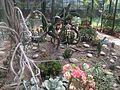 Flora@Shimla.jpg
