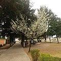 Flores de final de invierno.jpg