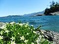 Flores en el Lago Nahuel Huapi.JPG