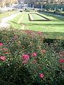 Flores rosas y seto, San Ildefonso, Segovia, España, 2014.jpg