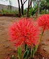 Flower@.jpg
