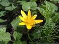 Flower (140167511).jpeg