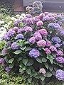 Flower Dortmund 24.jpg