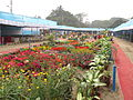 Flower Show 2012 - Indian Botanic Garden - Howrah 2012-01-29 1760.JPG