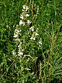 Flowers11Kokosovce7.JPG