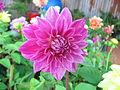 Flowers (211).jpg