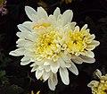 Flowers - Uncategorised Garden plants 266.JPG