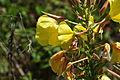Flowers in Par (9611).jpg
