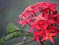 Flowers red.jpg