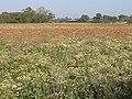 Flowery field - geograph.org.uk - 594984.jpg