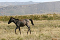 Foal catching up, Davit Garedja.jpg
