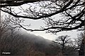 Fog and jungle جنگل ابر - panoramio.jpg