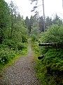 Footpath in Strathyre Forest - geograph.org.uk - 869824.jpg