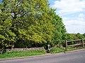 Footpath to Birks Wood, Hagg Stones Road, Oughtibridge - geograph.org.uk - 1282310.jpg