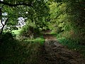Footpath to Downham Rd - geograph.org.uk - 74622.jpg