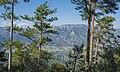 Forêt domaniale des Avant-Monts 07.jpg