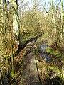 Fordham Woods - geograph.org.uk - 1208352.jpg