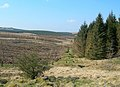 Forest and Moor - geograph.org.uk - 378845.jpg