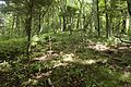 Forest in Doshi 05.jpg