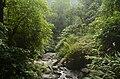Forest in East Khashi hills district JEG7531.jpg